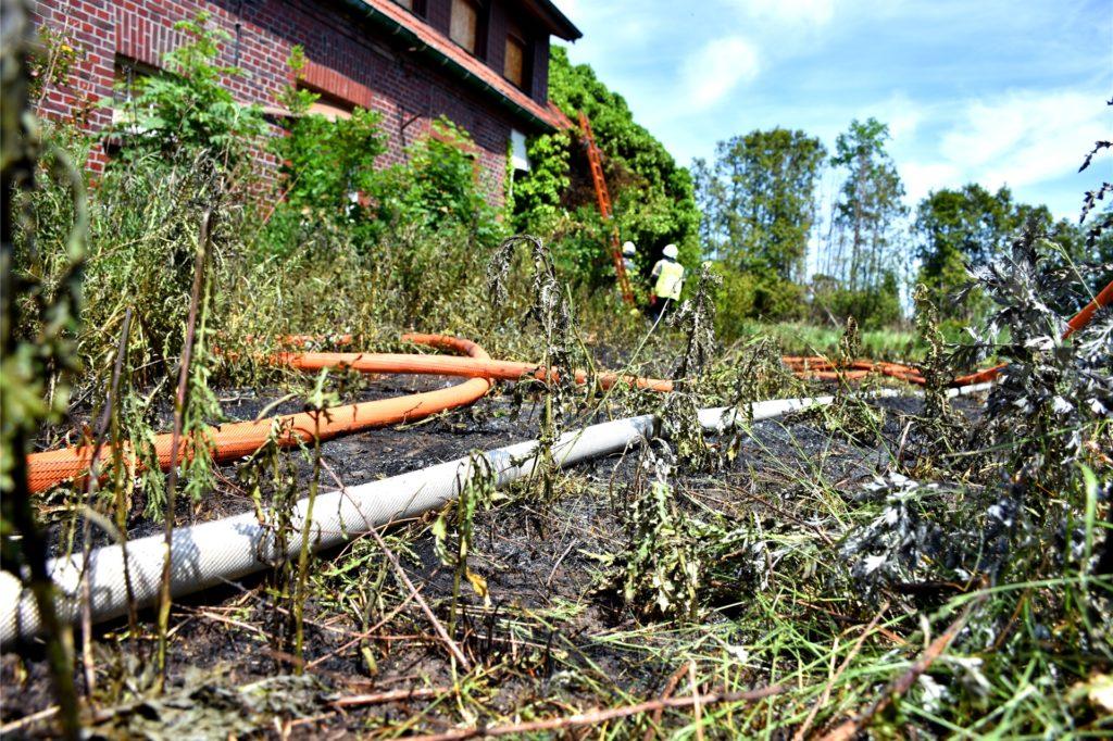 Die Vegetation ist komplett ausgetrocknet. Ein Feuer kann sich daher rasend schnell ausbreiten.