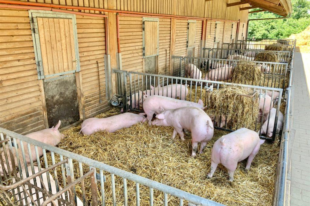 Der Außenbereich des Stalls: Durch die Klappe können die Tiere ins Innere.