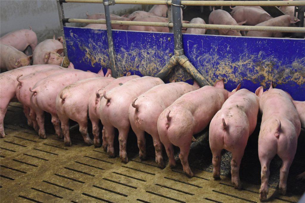 Werner Schweinehalter machen sich nach der Schließung des großen Tönnies-Schlachthofes Sorgen.