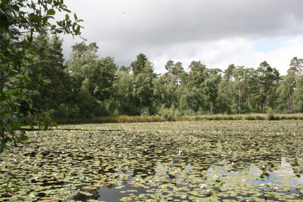 Der See ist komplett bedeckt mit Seerosen.