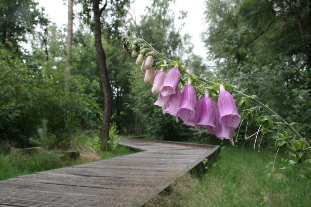 Ein Weg aus Holzplanken führt den Besucher durch das Schwatte Gatt.