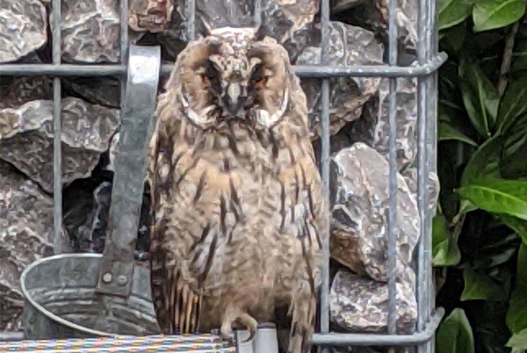 Die Bewohner des Adlerwegs bekommen seit einigen Tagen regelmäßig ungewöhnlichen Besuch.