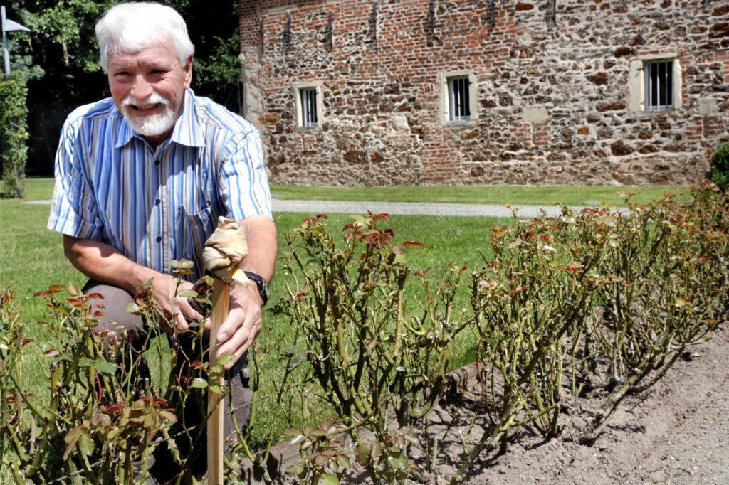 Die Rosenblüten wurden von Rehen abgefressen. Auch übel riechende Öllappen haben sie nicht davon abgehalten, zeigt Dr. Ludger Homeyer.