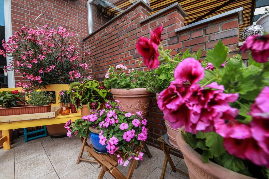 Schon auf der Terrasse finden sich die unterschiedlichsten Blumen.