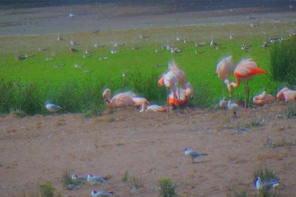 Biologin Regine Kern hat die berechtigte Hoffnung, dass die Flamingos auch im kommenden Jahr wieder ins Venn kommen.