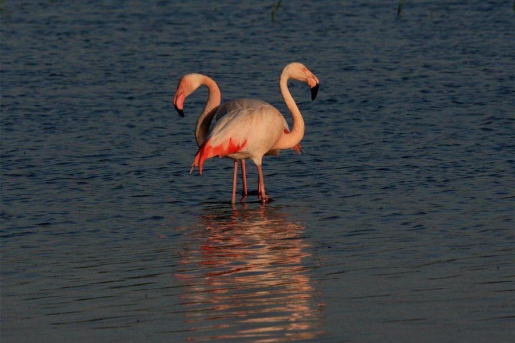 Die Flamingos haben das Venn verlassen.
