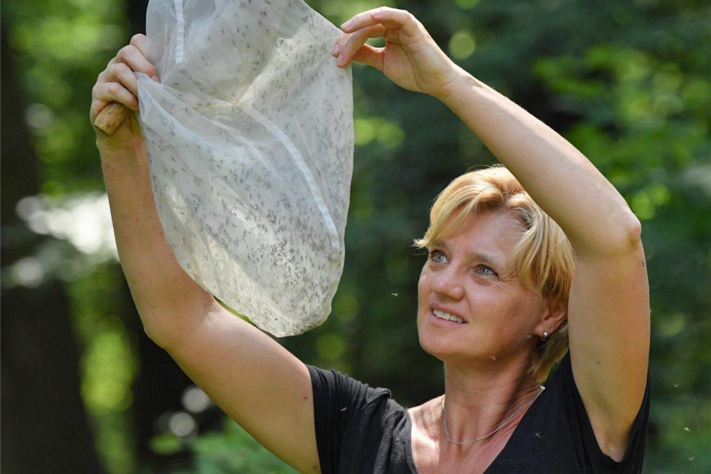 """Biologin Doreen Werner hat viele """"Überschwemmungsmücken"""" mit einem Kescher im Auwald gefangen."""