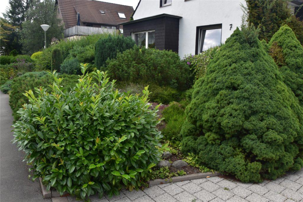Der Vorgarten von Holger Jannusch wurde vor mehreren Jahrzehnten als schönster Dortmunds ausgezeichnet.