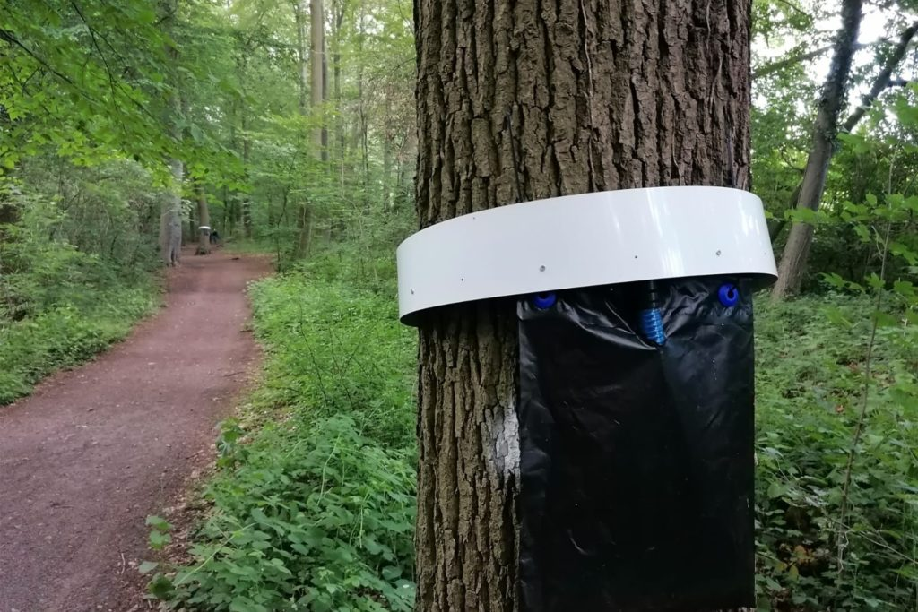 An zahlreichen Eichen im Stadtwald sind diese Fallen für Eichenprozessionsspinner angebracht. Ihre Wirkung ist umstritten.