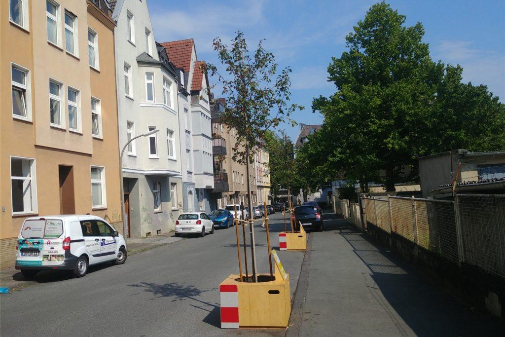 Die Bäume im Kasten stehen stellvertretend für einen Baum, der am Standort gepflanzt werden könnte. Anwohner können sich so mit dem Straßenbild, das mit einem Baum entstehen könnte, vertraut machen.