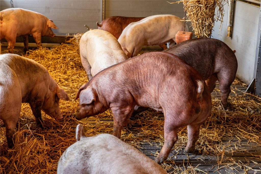 Markus Wiesmann setzt auf seinem Hof auf Tierwohl und Respekt vor den Tieren.