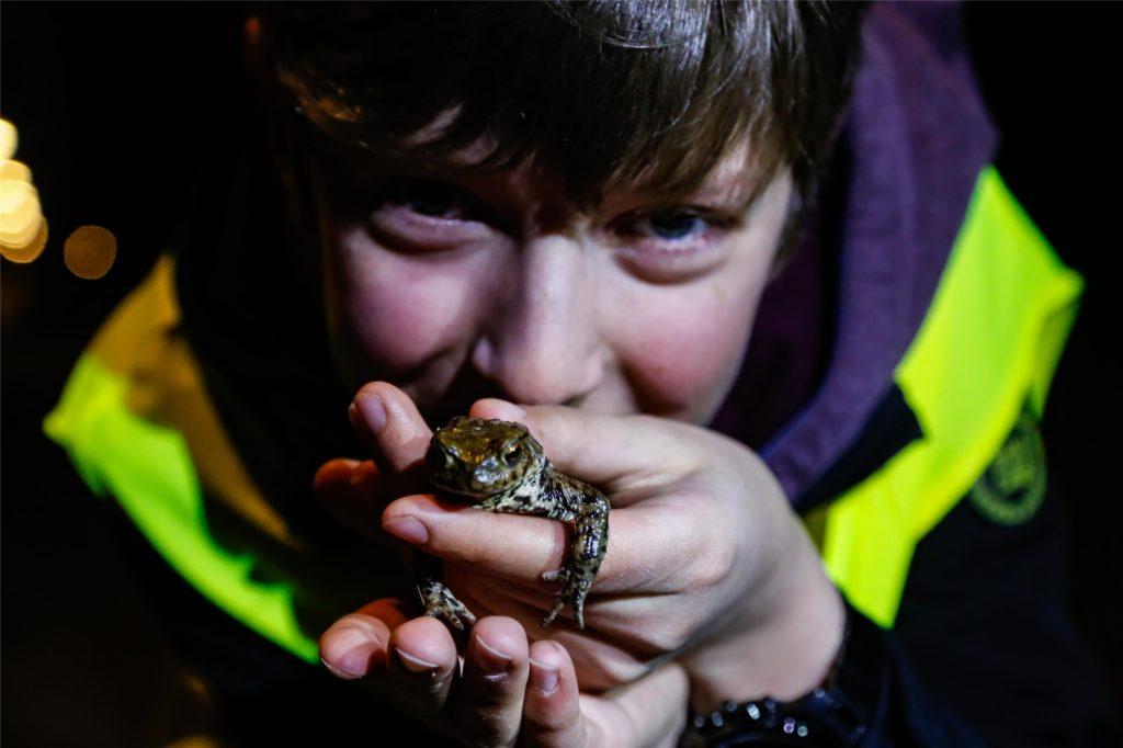 Ein Foto aus den vergangenen Jahren: Ein Junge hält eine Erdkröte in der Hand.