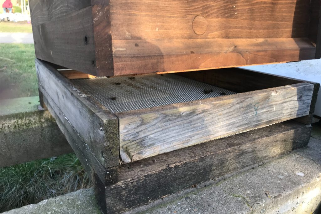 Auf dem Unterboden im Bienenstock von Antonius Schulze Beikel liegen ein paar tote Bienen.