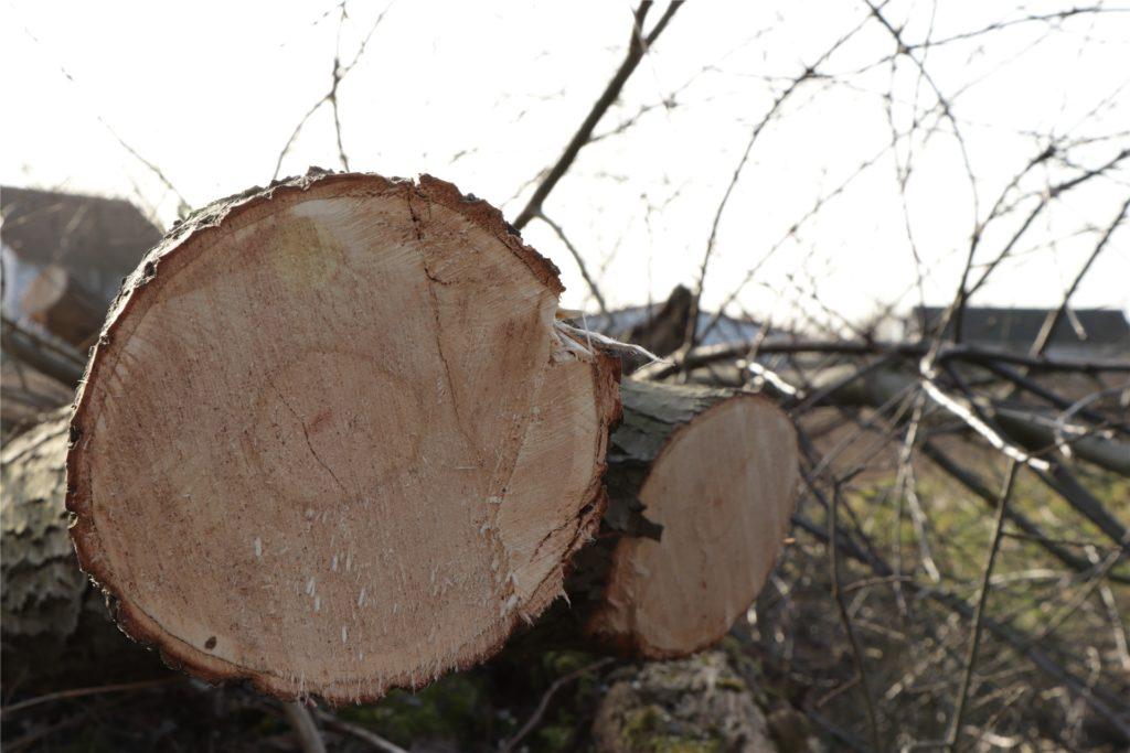 Baumstämme liegen nach der Rodung auf dem zukünftigen Baugebiet.