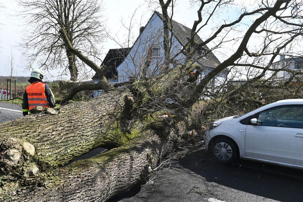 Eine 26-Jährige und ihre Mutter aus Marl hatten großes Glück. Um Haaresbreite verpasste der umstürzende Baum ihren Wagen.