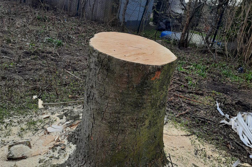 """Der Baum, schreibt die Anwohnerin, sei """"mal groß und gesund"""" gewesen."""