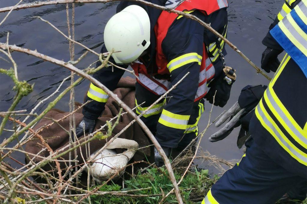 Ein Feuerwehrmann sichert den verletzten Schwan im Wasser.