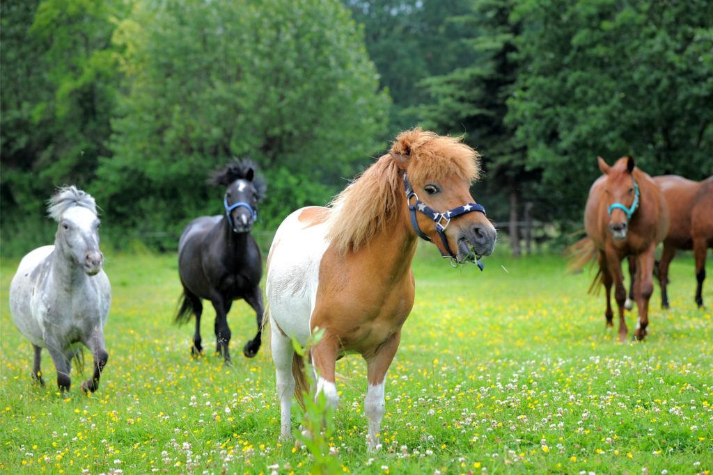 Pferde mögen saftiges und sauberes Gras. Hundehaare zwischen den Halmen können für sie zu einer ernsthaften Gefahr werden.