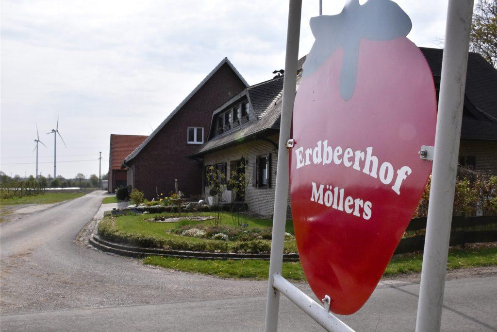 Wer Erdbeeren lieber selber pflückt, kann das bald in Stadtlohn beim Erdbeerhof Möllers machen.