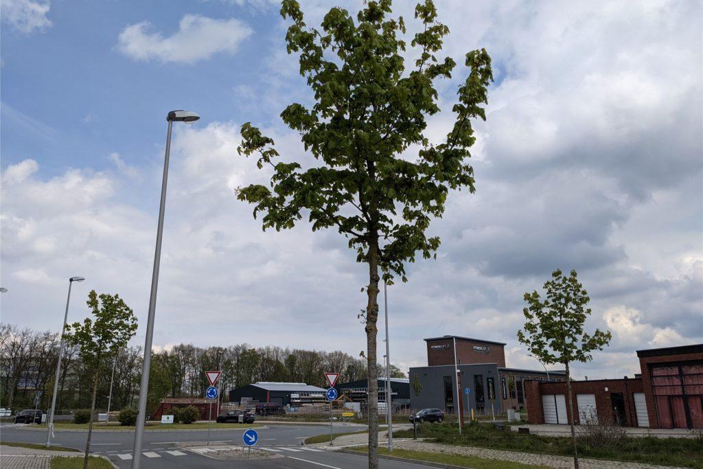 Mehr als 300 Allee-Bäume wurden vor fünf, sechs Jahren auf dem Zechengelände angepflanzt.