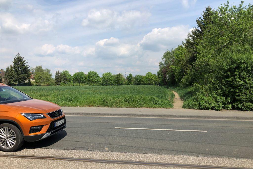 Über den vielbefahrenen Hellweg ist der Hirsch in Richtung Grüngürtel zwischen Hellweg und Grüningsweg entflohen