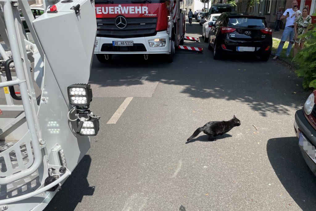 Nach der Rettung ergreift die Katze schnell die Flucht.