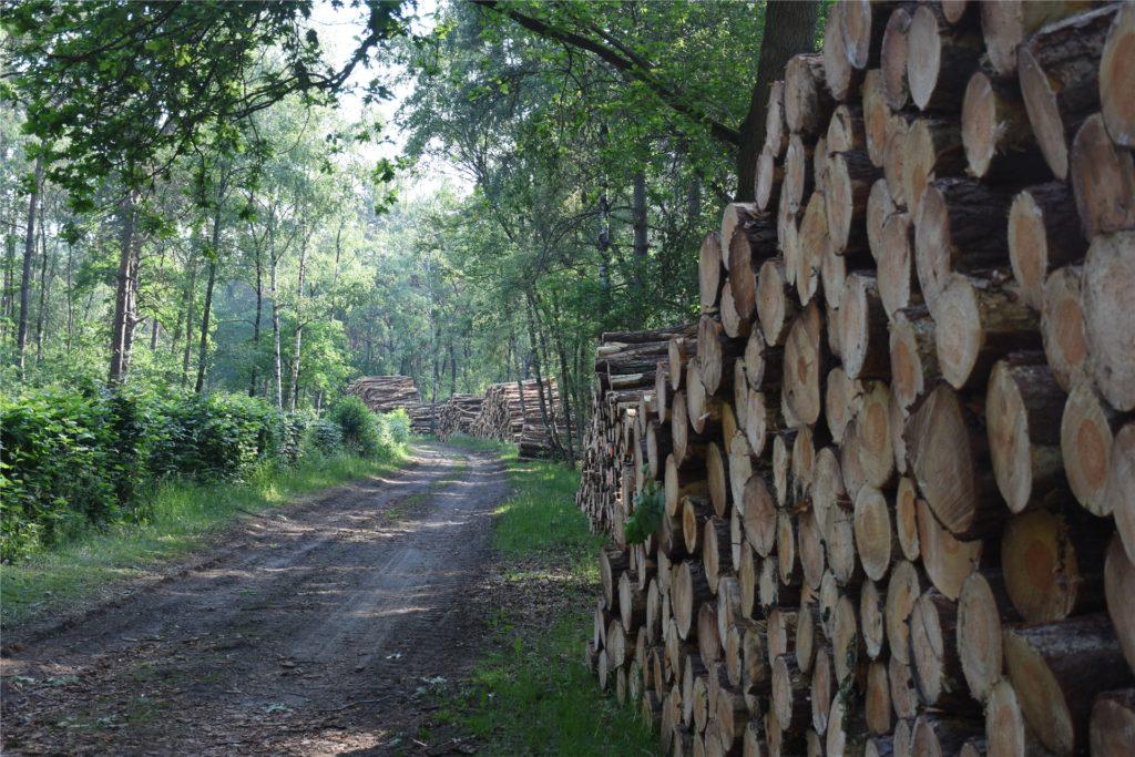 Umfangreiche Rodungen finden derzeit im Waldgebiet zwischen Silbersee III und Quarzwerken statt.