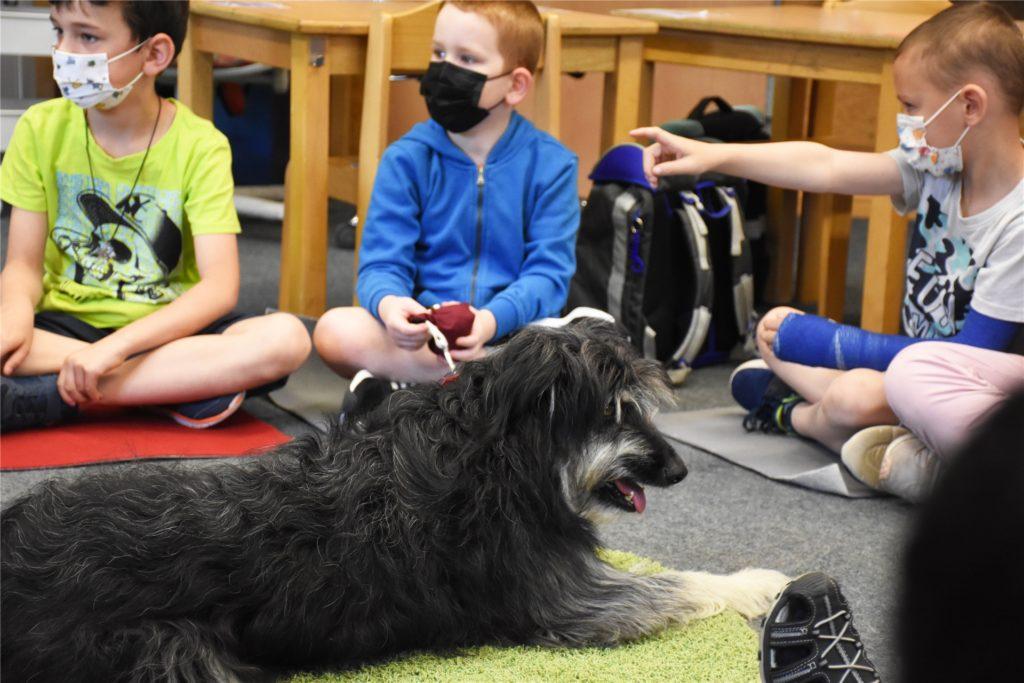 Schulhund Benni befindet sich noch in der Ausbildung und muss sich noch an die vielen Kinder gewöhnen.
