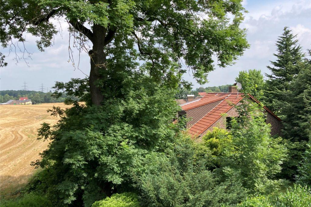 Die Esche im Garten von Marion Bossmann darf nicht einfach so gefällt werden. Sie ist von der Baumschutzsatzung geschützt.