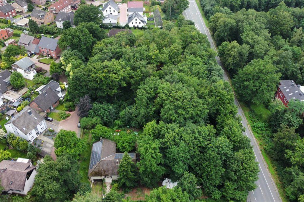 Das Sythener Wäldchen wird bebaut. Zur Münsterstraße hin bleiben Bäume stehen, die dann von den neuen Eigentümern der Häuser gepflegt werden müssen.